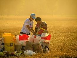 麦收的场景