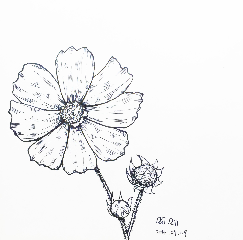 桂花的画法简笔画图片