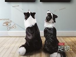 [宠物摄影] Dog 合集