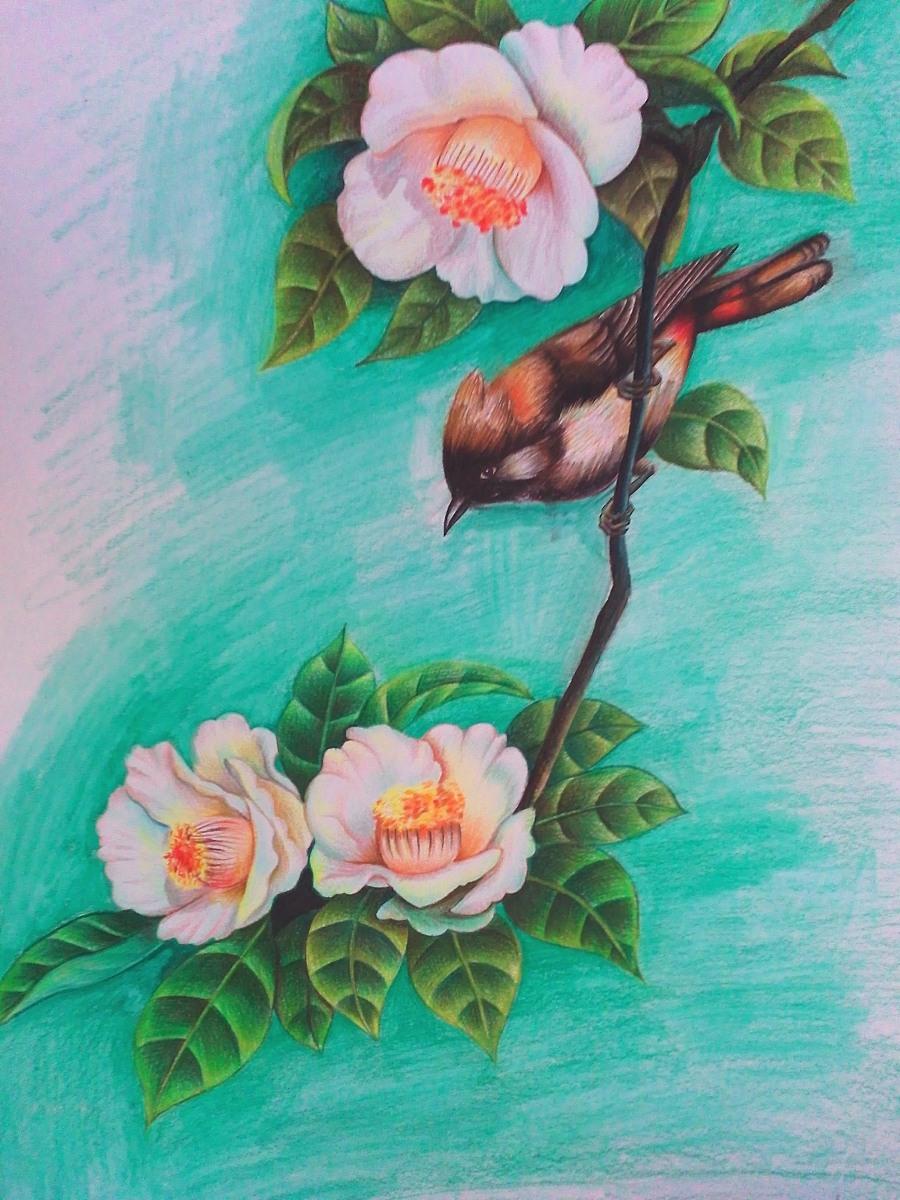 使用了:其他 - 彩色铅笔        手绘花鸟