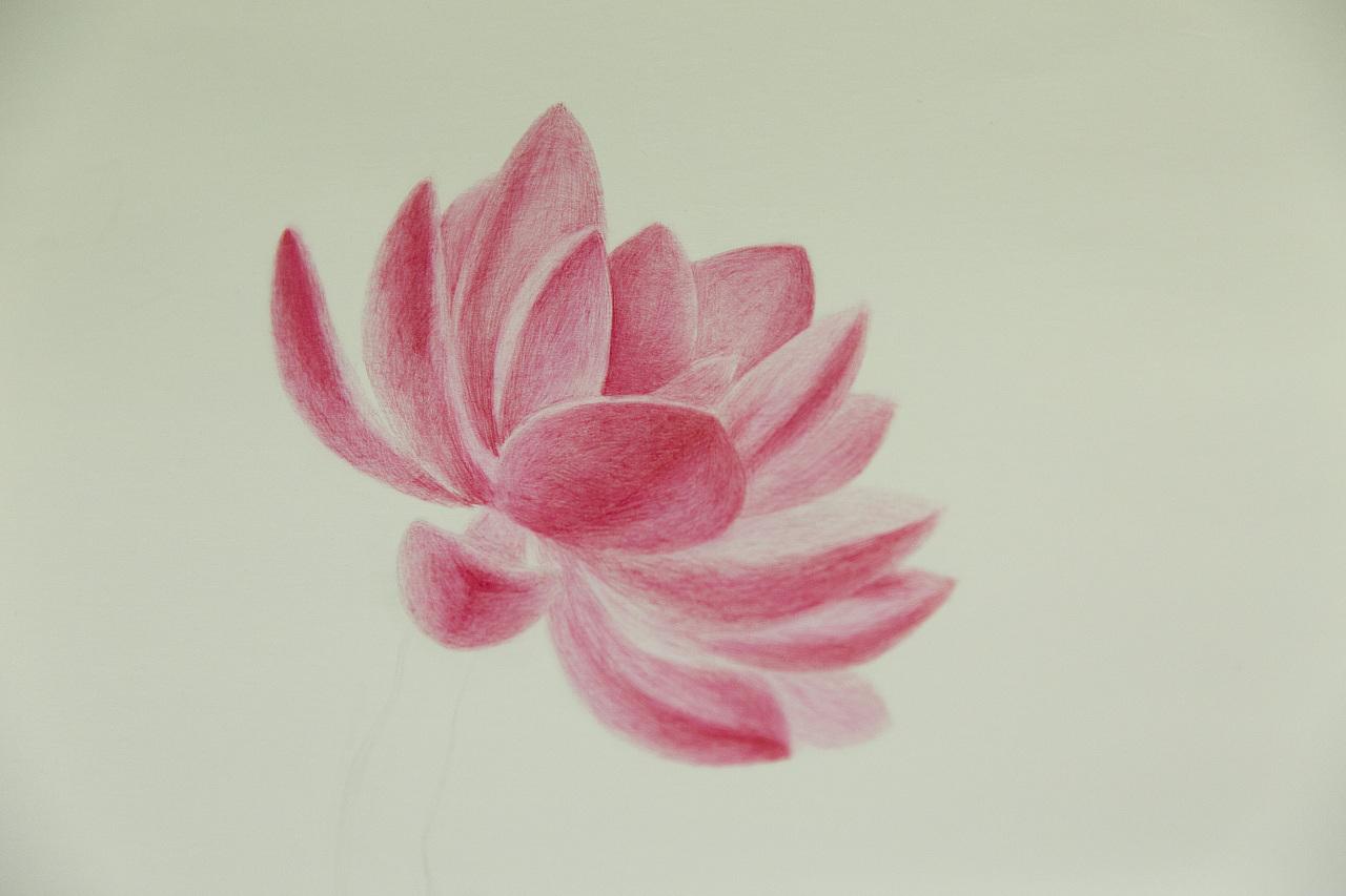 多肉植物圆珠笔手绘