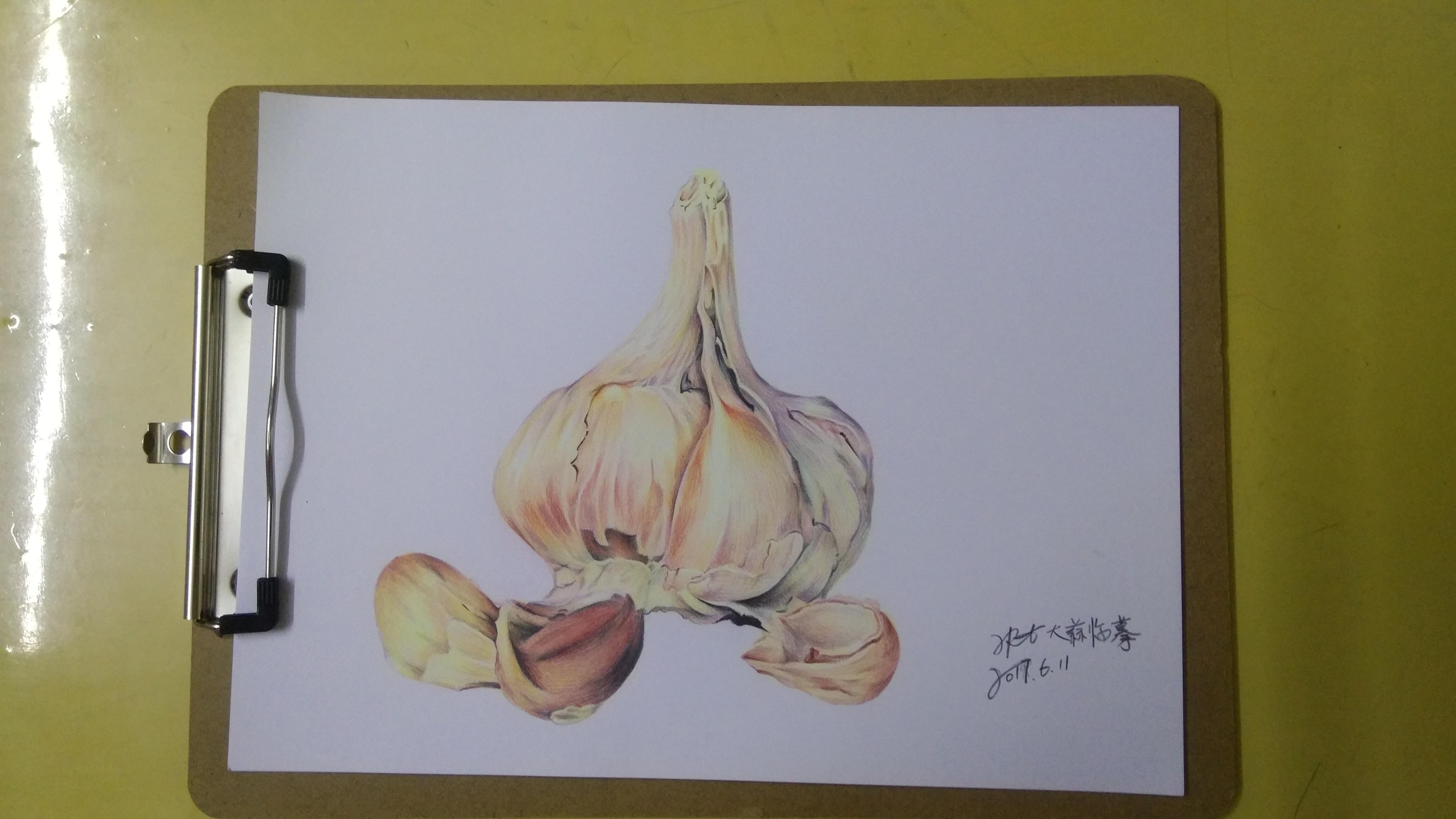 大蒜生长观察记录手绘