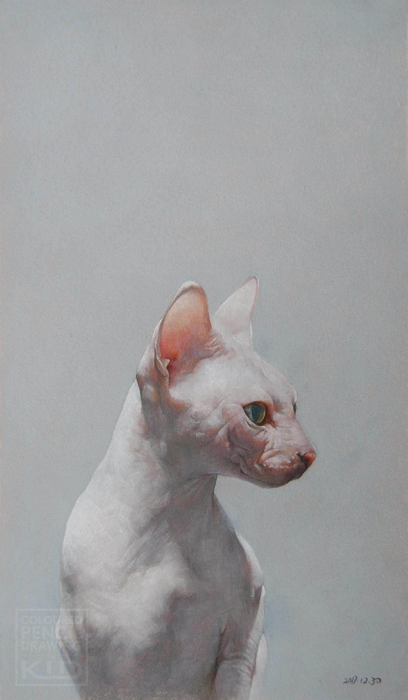 新浪微博_彩铅动物-无毛猫|纯艺术|彩铅|何石磊Leo - 原创作品 - 站酷 (ZCOOL)