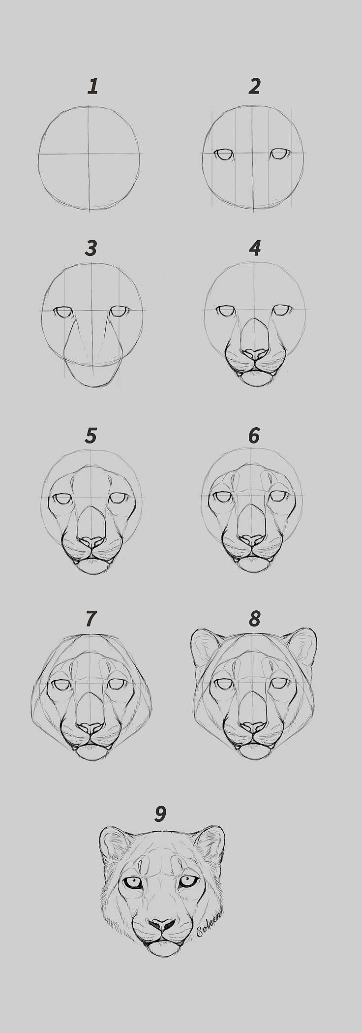 动物猎豹头手绘步骤简易步骤