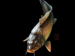 水产老板家的鱼