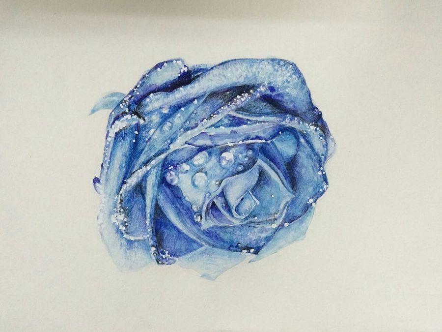 彩铅手绘玫瑰花|绘画习作|插画|白日梦想家vic