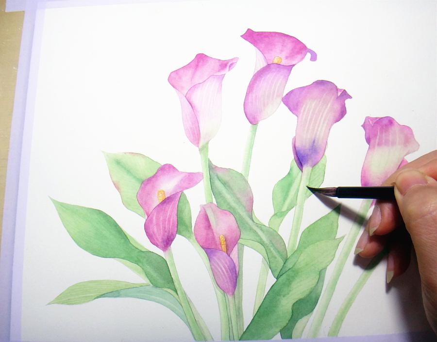 手绘水彩马蹄莲