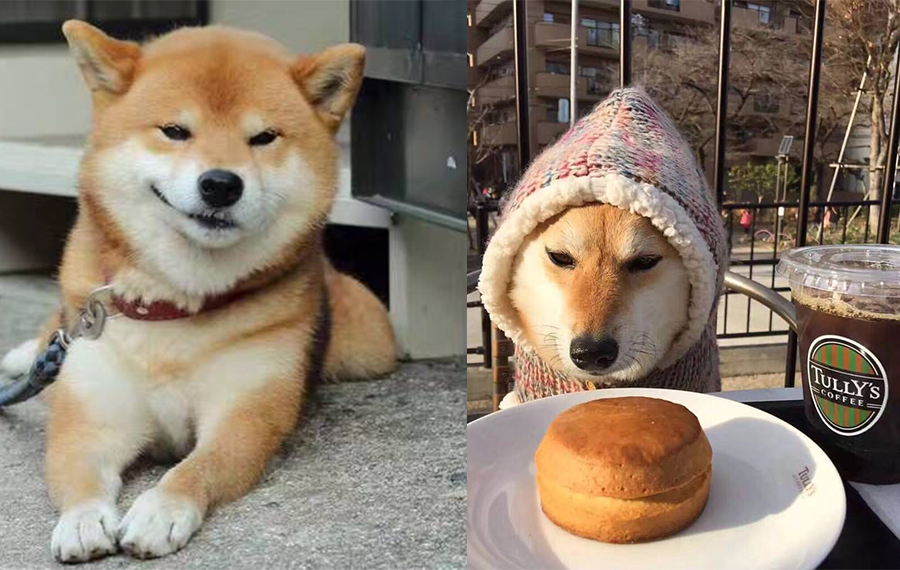 茶杯上的动物系列-爱吃甜甜圈的秋田