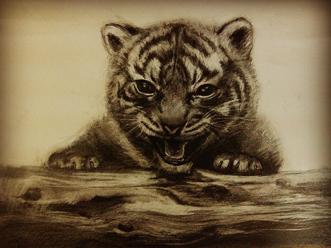 虎黑白图片手绘