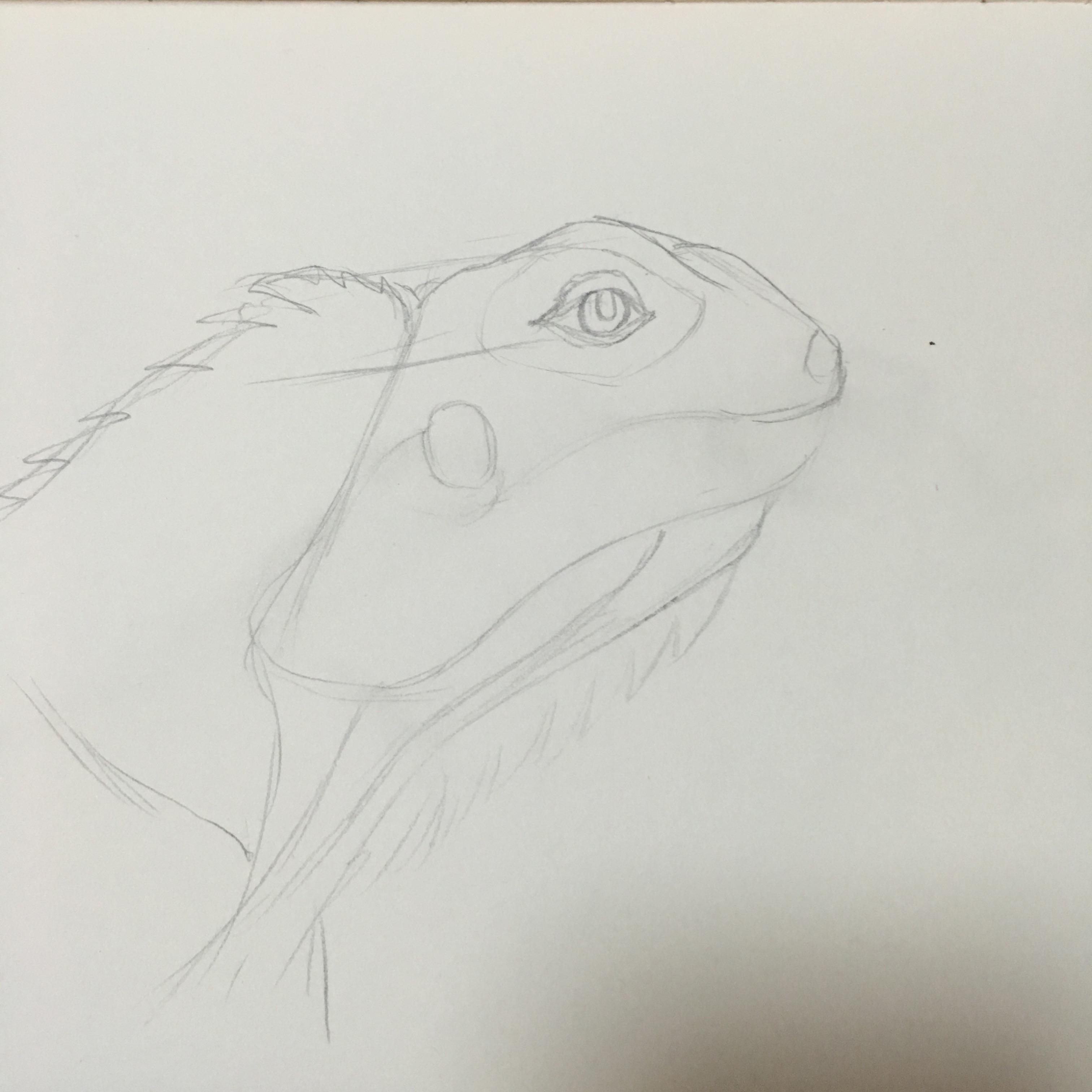 钢笔手绘——绿鬣蜥
