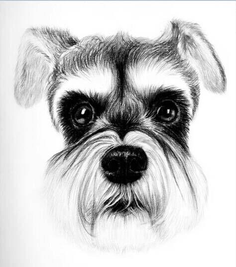 素描手绘狗狗