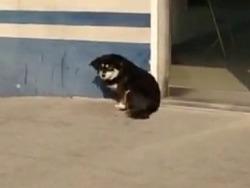 """民警收留两只流浪狗  取名:""""取保""""和""""候审"""""""