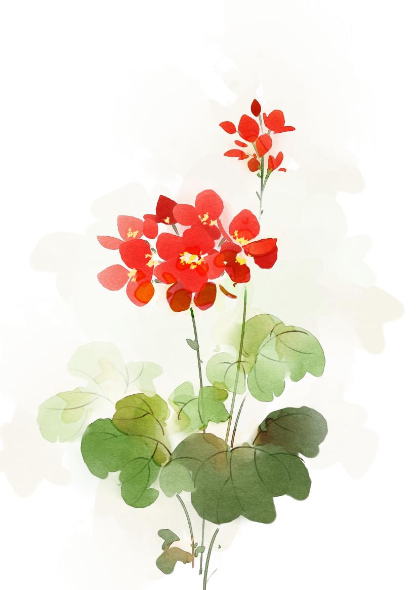手绘板水彩花卉