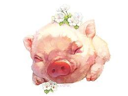 【萌宠by雪娃娃】猪猪睡啦