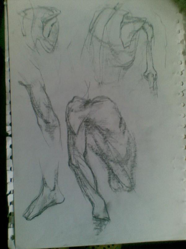 人体解剖 手绘