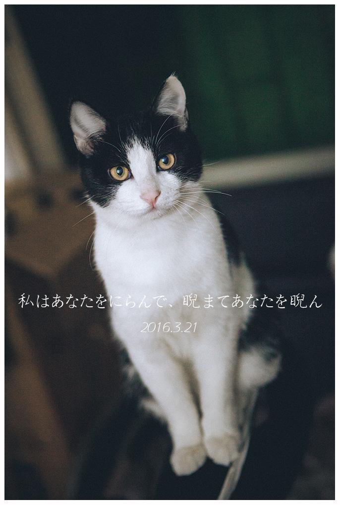 萌萌哒的早晨之喵|宠物/动物|摄影|贱希希