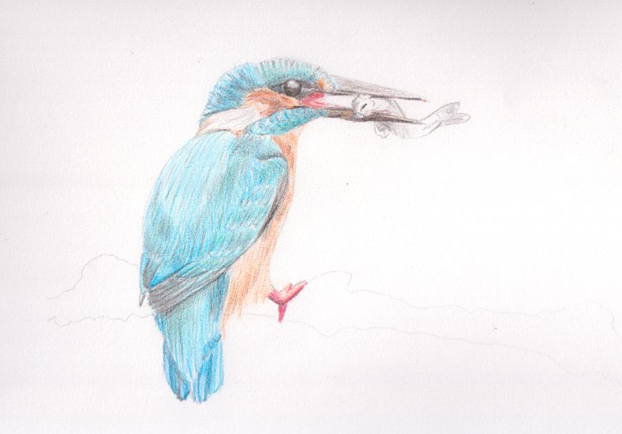 彩铅手绘翠鸟