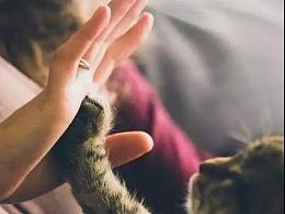 2684亿的大项目,宠物的贡献超越了人类幼崽 | ARK观点