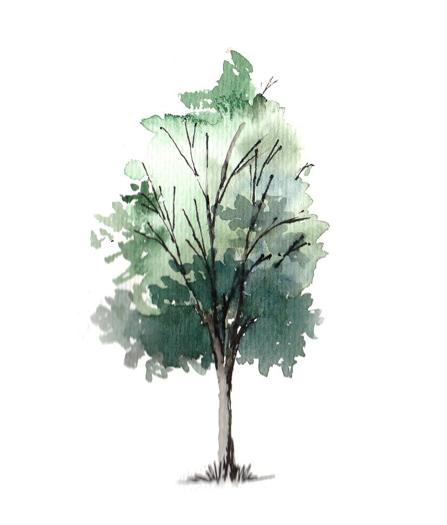 手绘插画树水彩