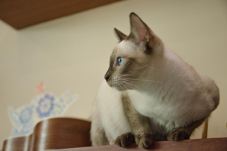 喵.|摄影|动物|十二有猫 - 原创作品 - 站酷 (zcool)图片