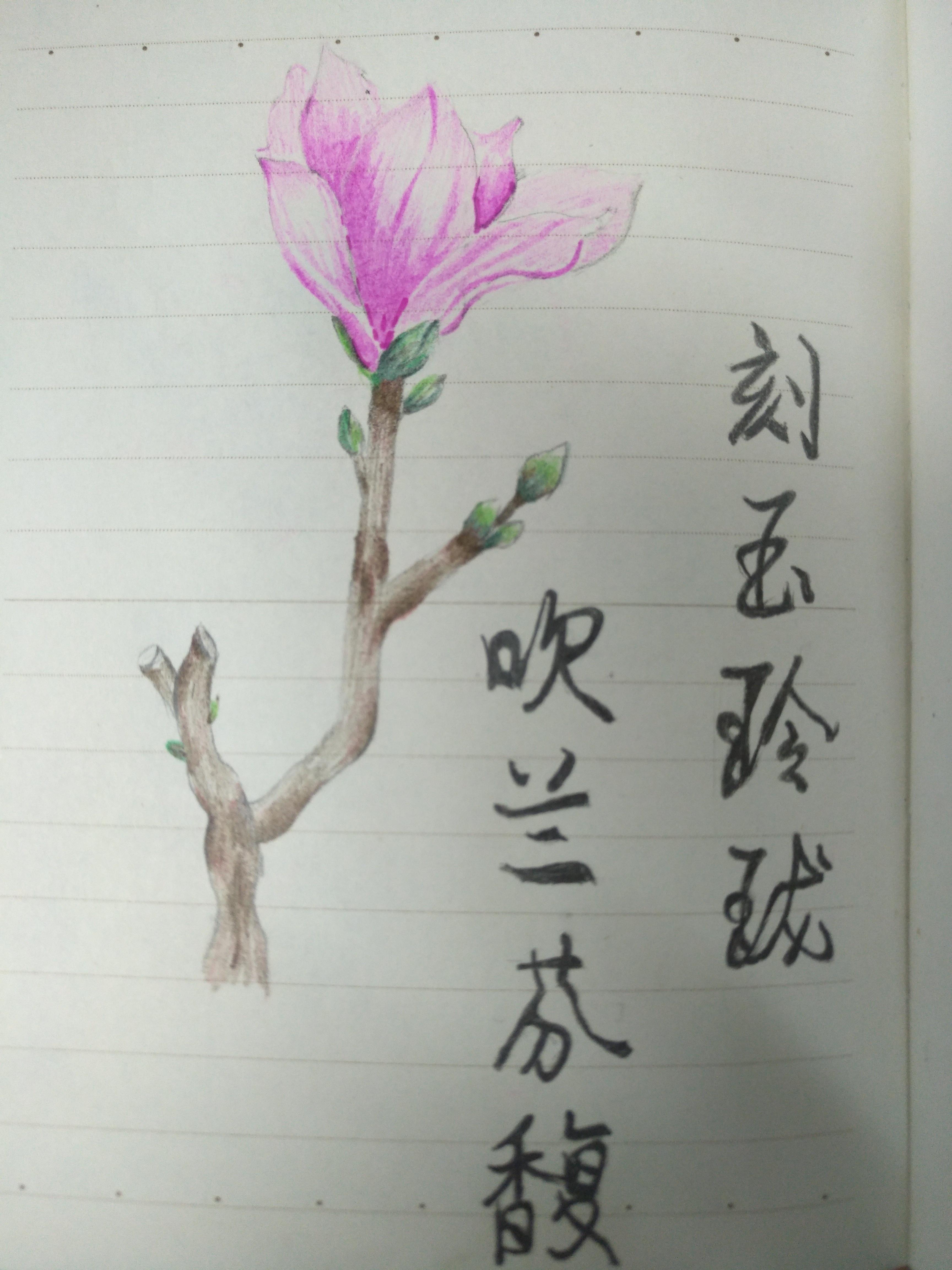 一些简单的手绘|纯艺术|彩铅|折花人 - 原创作品
