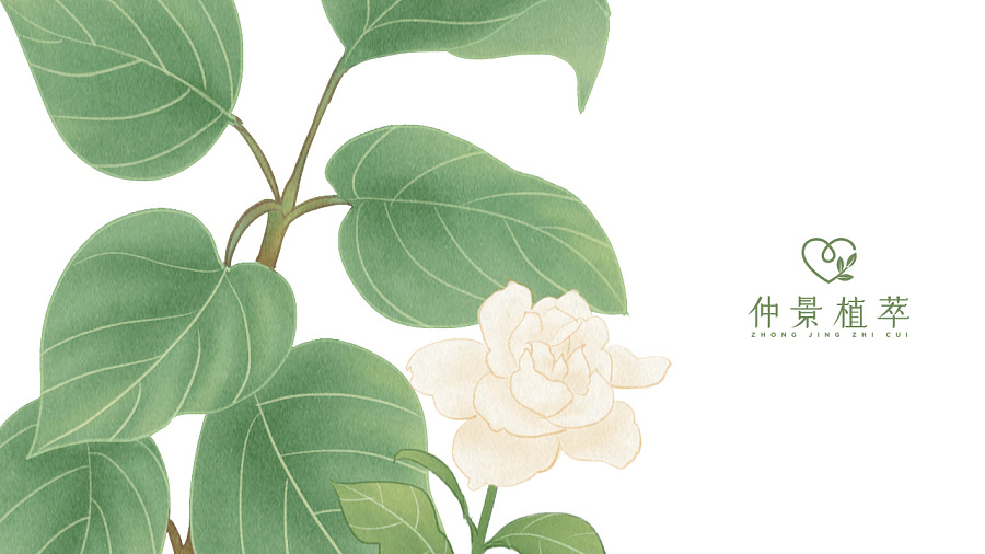 查看《《仲景植萃》品牌设计》原图,原图尺寸:1280x720