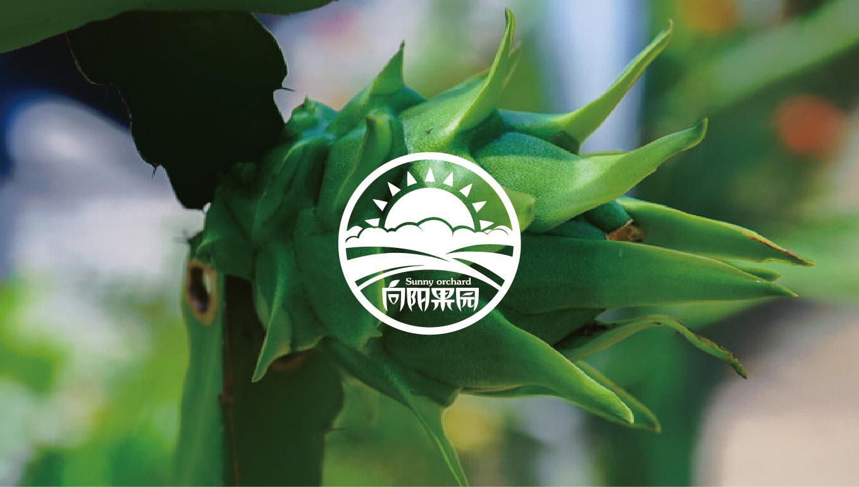 【农产品创意】向阳果园-火龙果品牌设计图片