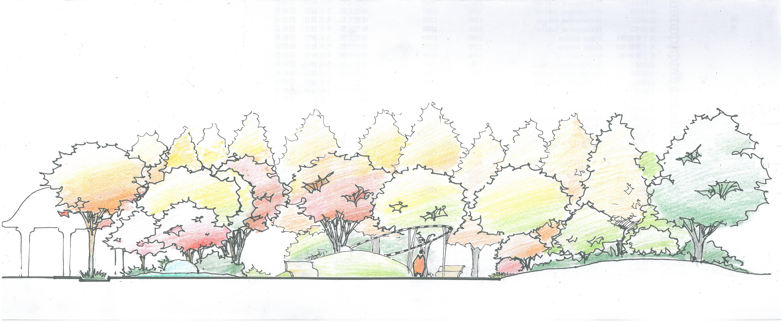 苗木设计立面手稿