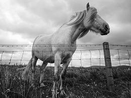 黑白丨苏格兰天空岛·自然生长