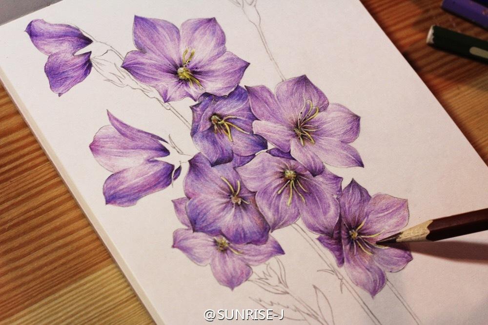 原创彩铅手绘花卉植物