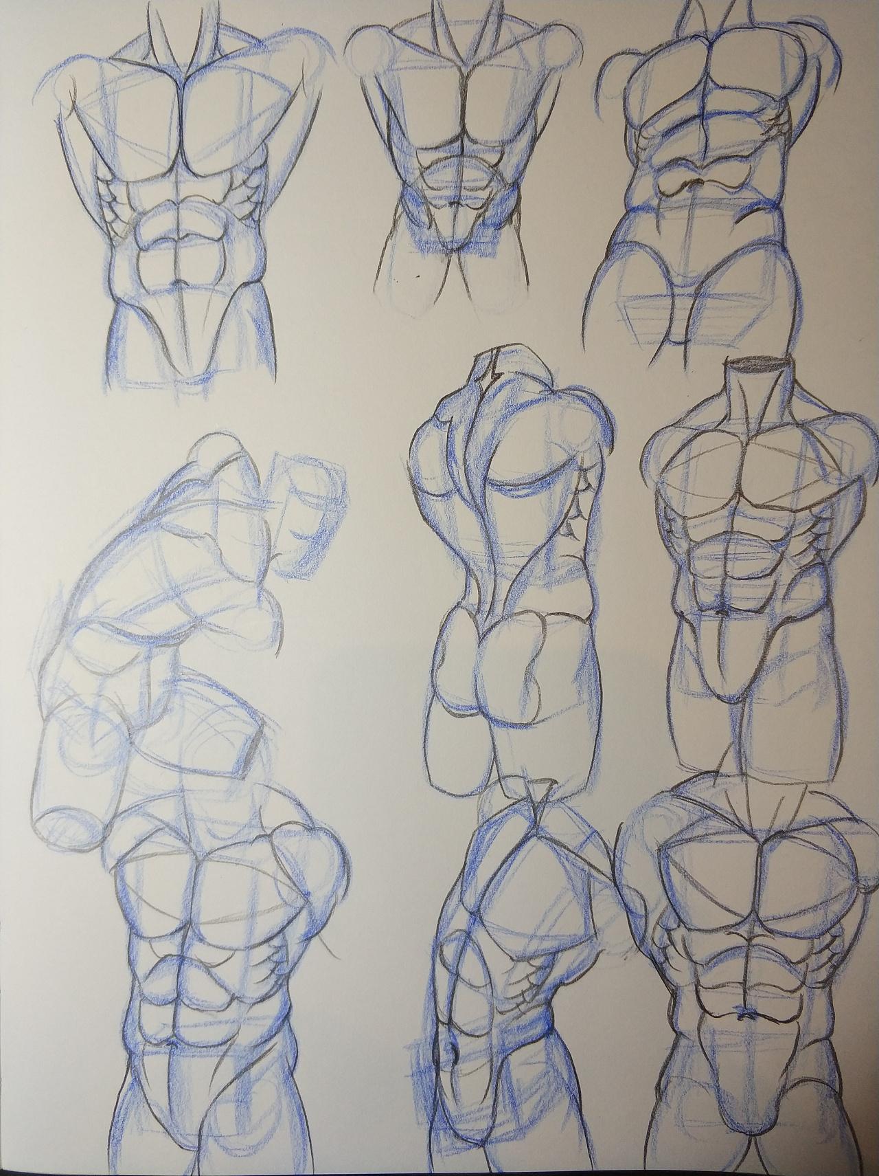 人体结构练习