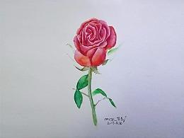 原创插画水彩玫瑰