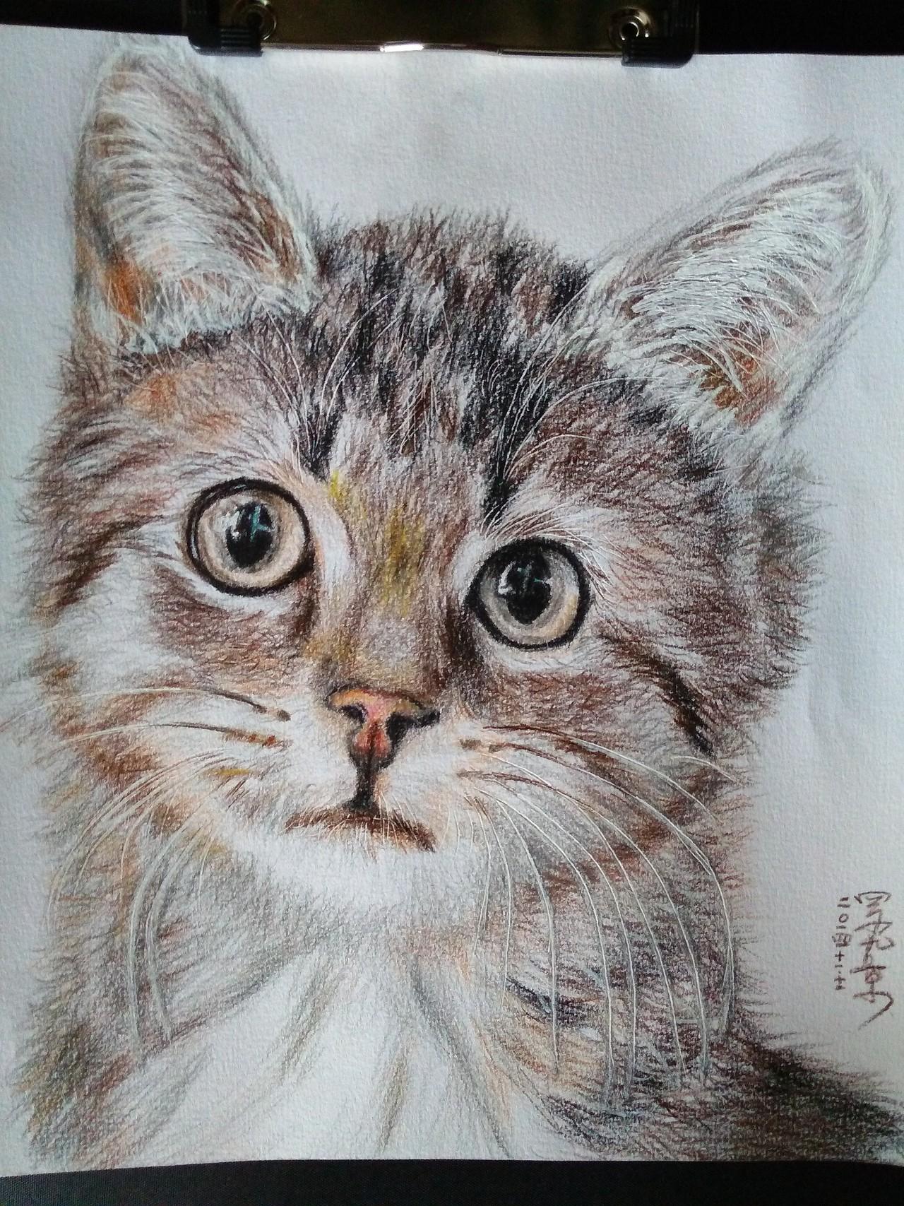 彩铅手绘萌猫