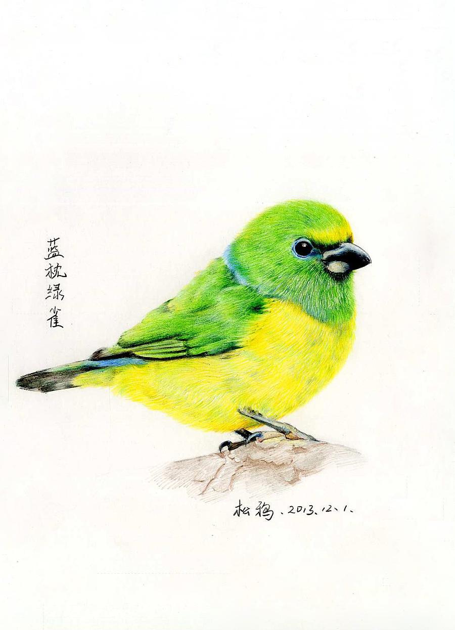 彩铅鸟类手绘——组图