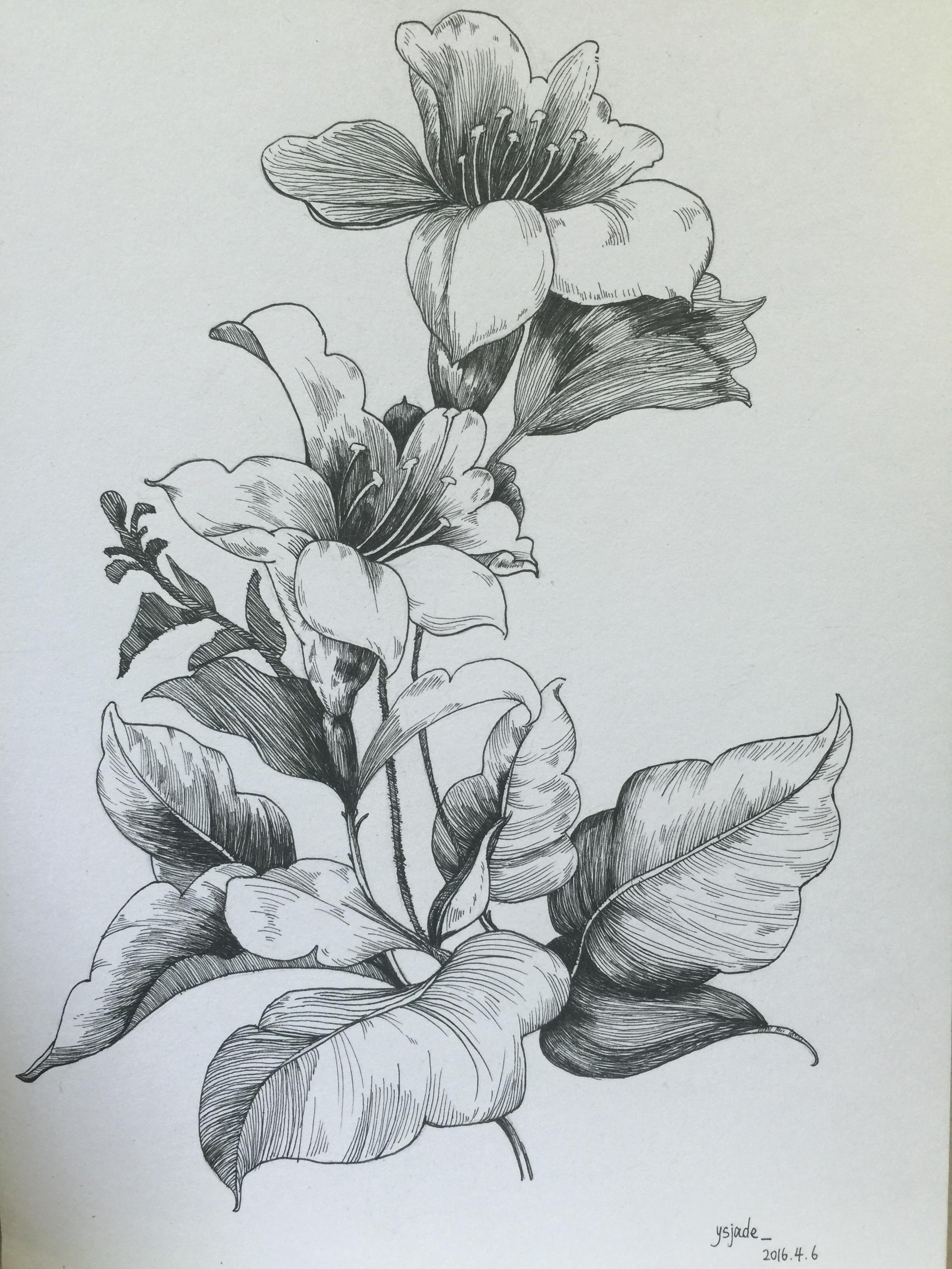 素描花朵凋落图片图片