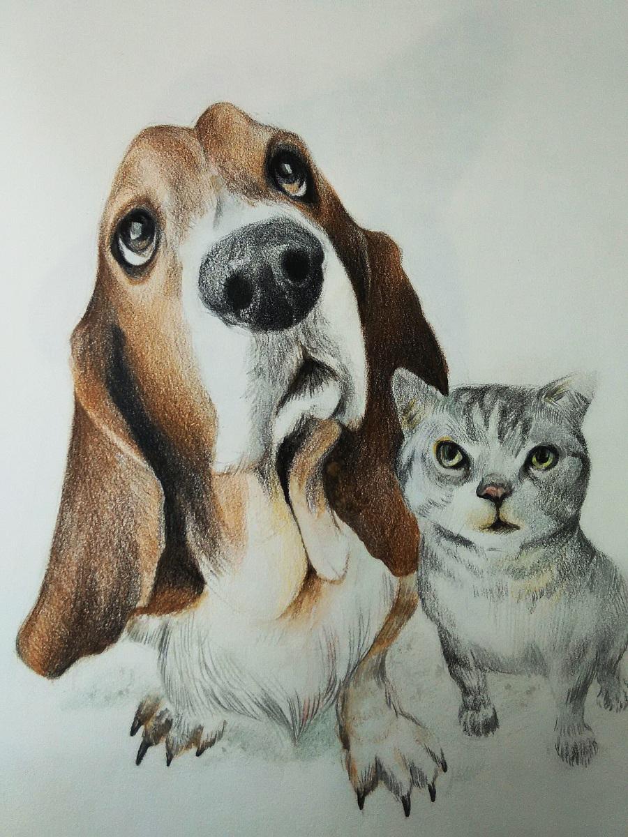 彩铅手绘|肖像漫画|动漫|伍声