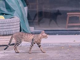 寻猫集47