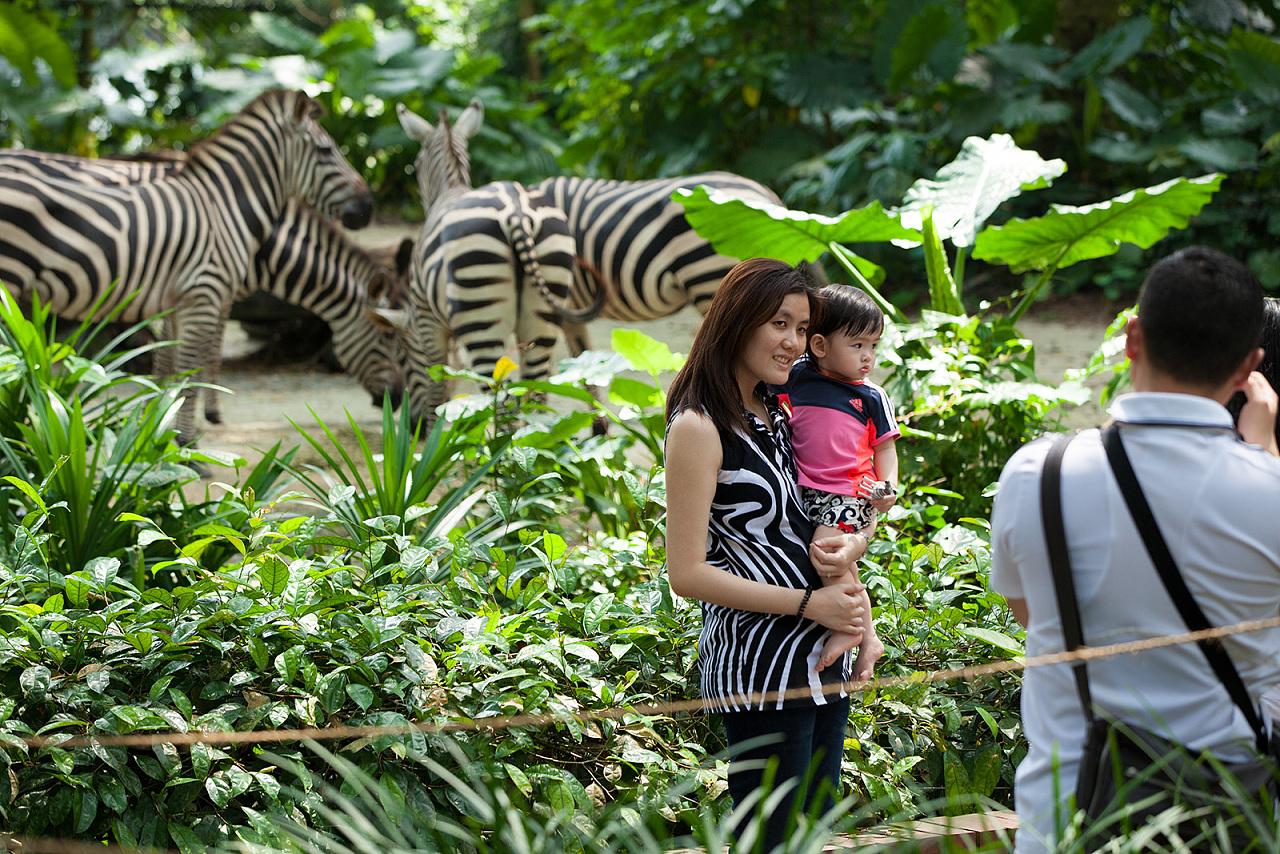 新加坡动物园及环球影城