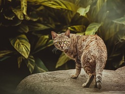 太空狗宠物摄影 公园流浪猫