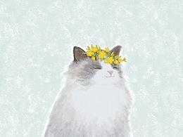 春天和猫ヾ(=・ω・=)o