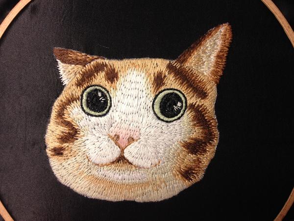 其实这是瓜皮猫.我真的没脸说.