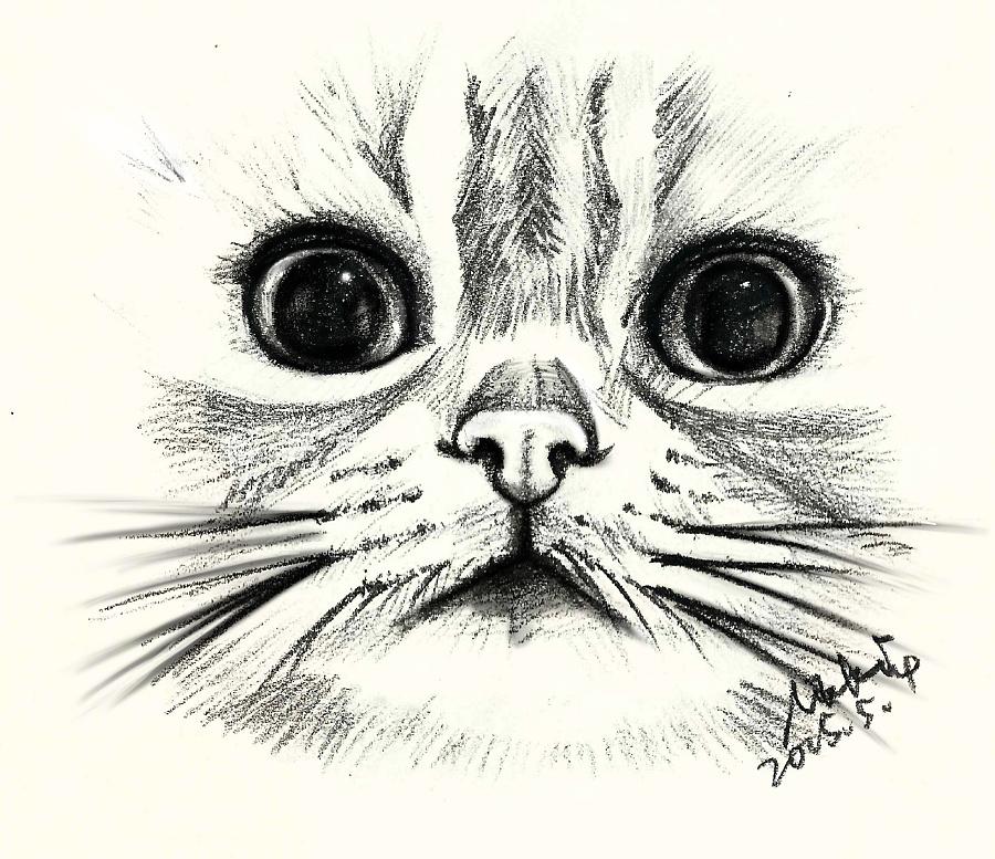 手绘猫咪|绘画习作|插画|nikki