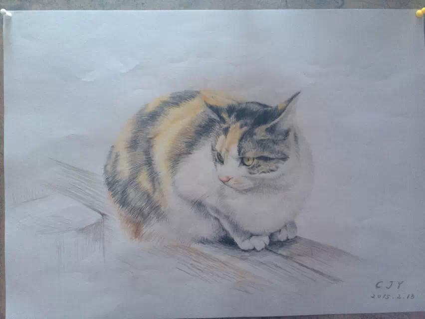 【彩铅】彩铅手绘的猫咪们~|彩铅|纯艺术|joy君