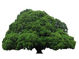 神秘的大树