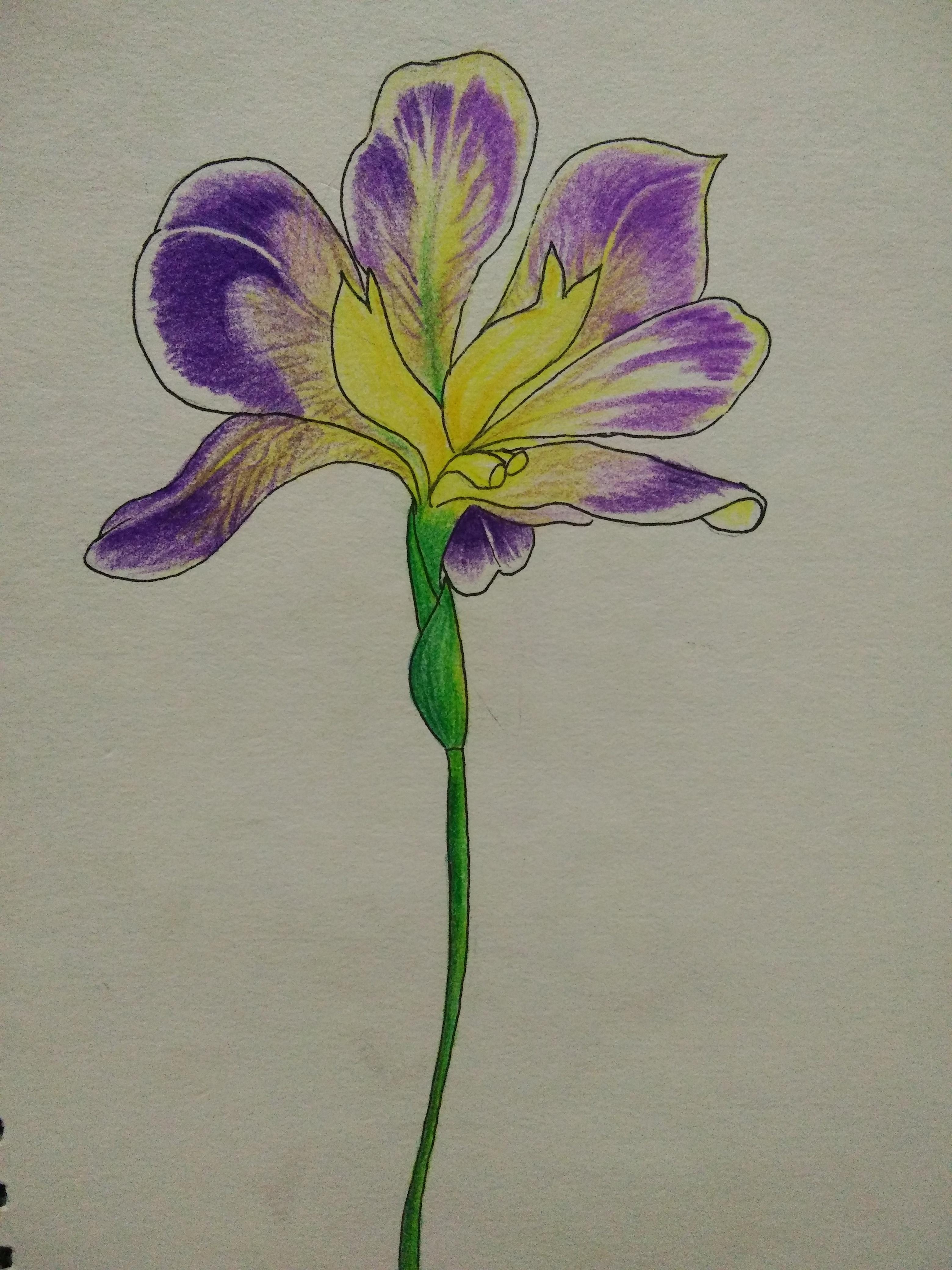 【手绘】花朵