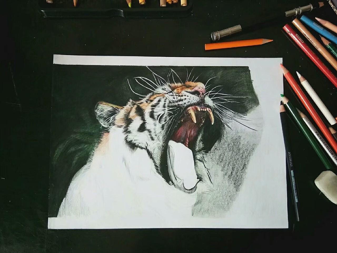 手绘老虎呀(附九图过程图)|纯艺术|彩铅|伊空水千