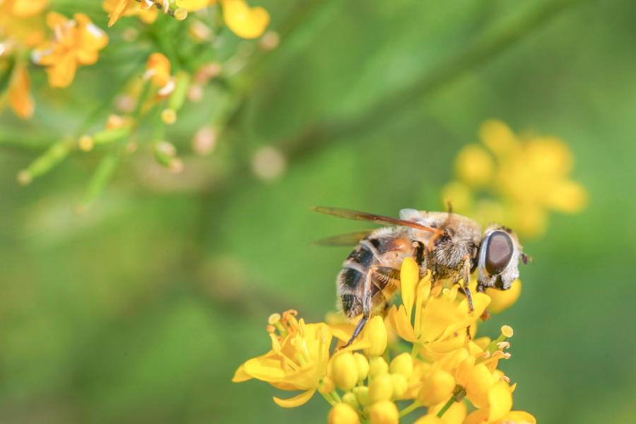 小蜜蜂呀采蜜忙 蚂蚁/最好 v蜜蜂 vikihe-原创设宠物轻甲蝙蝠侠动物图片