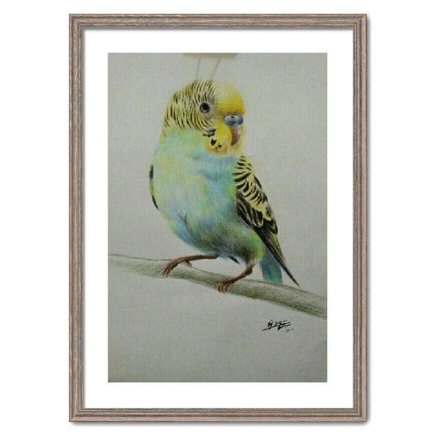 手绘鹦鹉|纯艺术|彩铅|抒情小丸子 - 原创作品 - 站酷