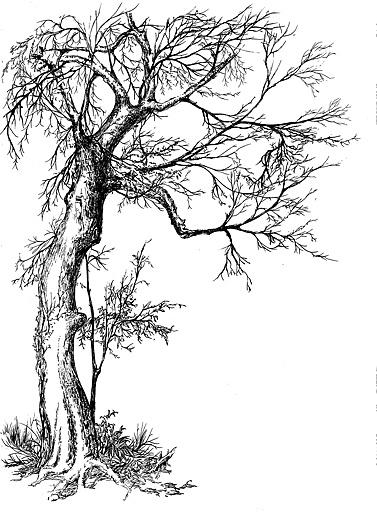 树木透视图手绘