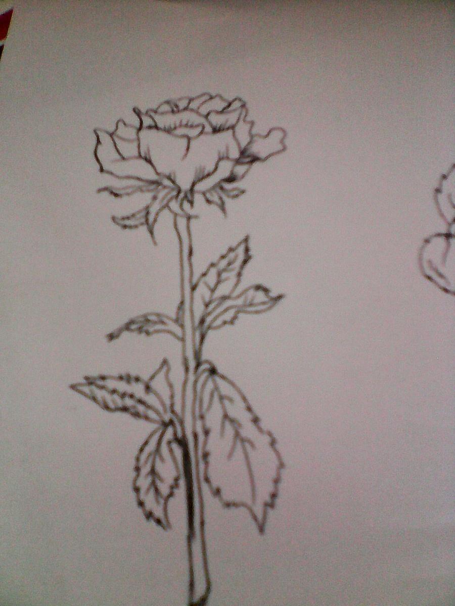 玫瑰素描手绘画